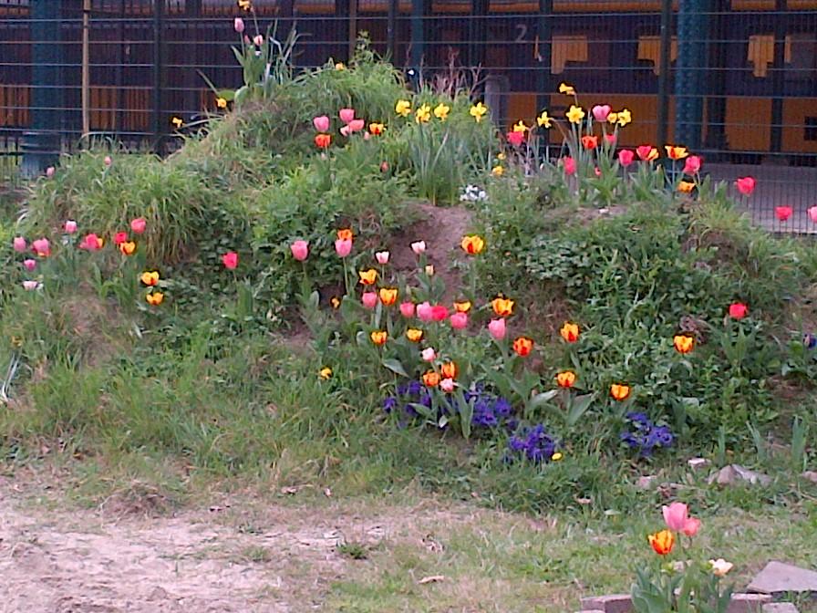 Het Buurtparkje in bloei